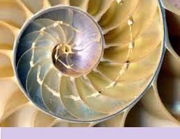 Nautilus giallo 2